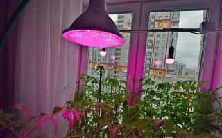 Освещение растение: какой свет для растений правильный?