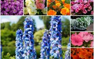 Осеняя высадка цветов: узнайте, какие растения можно посадить под зиму