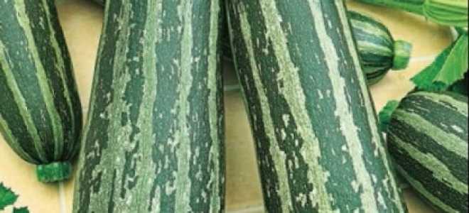 Кабачок 'Куанд' — описание сорта, характеристики