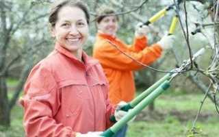 Обрезка плодовых деревьев: весенняя обрезка яблонь