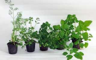 Пряные травы на подоконнике кухни
