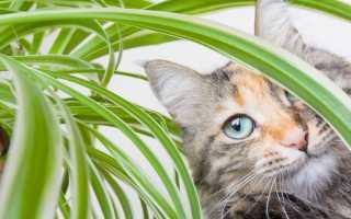 Как спасти любимые растения от домашнего кота?