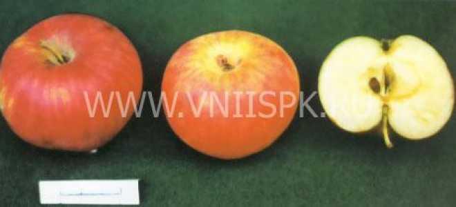 Яблоня 'Боровинка' — описание сорта, характеристики