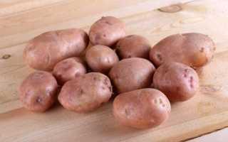 Картофель 'Синеглазка' — описание сорта, характеристики