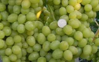 Виноград культурный 'Айваз' — описание сорта, характеристики