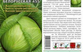 Капуста белокочанная 'Белорусская 455' — описание сорта, характеристики