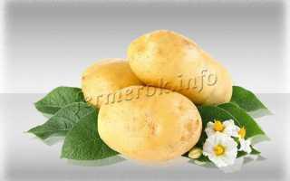 Картофель 'Зекура' — описание сорта, характеристики