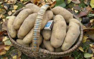 Картофель 'Марис Бард' — описание сорта, характеристики