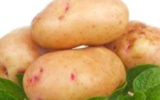 Картофель 'Любимец' — описание сорта, характеристики