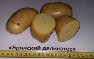 Картофель 'Брянская новинка' — описание сорта, характеристики