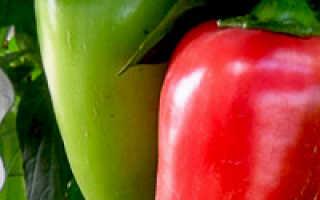 Выбираем лучшие сорта болгарского перца для Подмосковья, Урала, Сибири