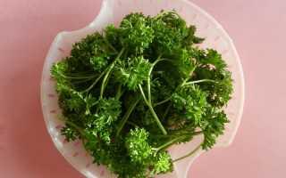 Петрушка кудрявая (Petroselinum crispum) — описание, выращивание, фото
