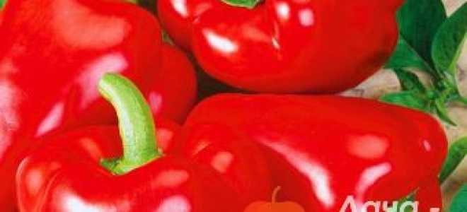 Перец сладкий 'Алеша Попович' — описание сорта, характеристики