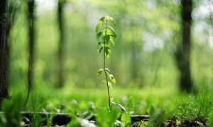 6 причин появления корневой поросли у плодовых деревьев