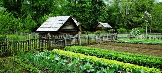 Удобрения для огорода – чем обогатить почву весной?