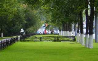 Виды газонов: луговой, садово-парковый, партерный, спортивный, мавританский