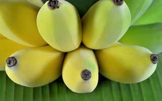 Банан (Musa) — описание, выращивание, фото