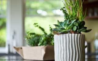 Выбираем растения для кухни