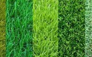 Какие виды трав подходят для газона?