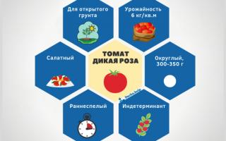 Томат 'Дикая роза' — описание сорта, характеристики