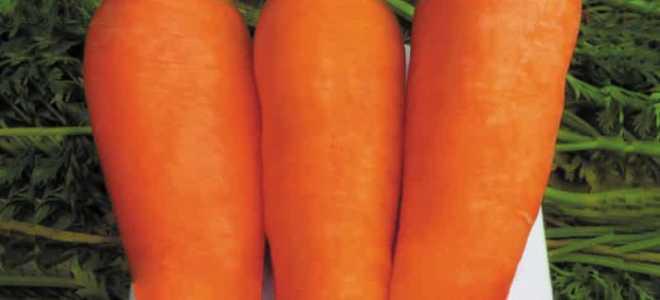 Морковь посевная 'Болтекс' — описание сорта, характеристики