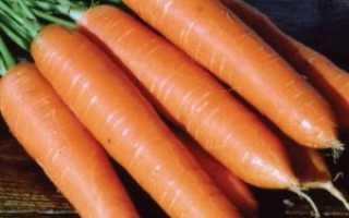 Морковь посевная 'Роте ризен' — описание сорта, характеристики