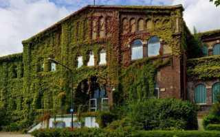 Выбор и выращивание домашних вьющихся растений