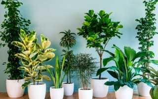 Растения для очистки воздуха: что посадить в квартире?