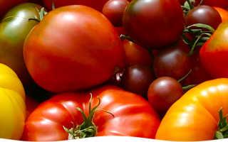 Какие ранние сорта помидор выбрать?