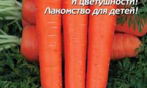 Морковь посевная 'Амстердамска' — описание сорта, характеристики