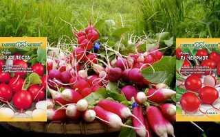 Редис 'Розово-красный с белым кончиком' — описание сорта, характеристики