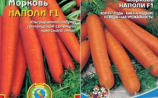Морковь посевная 'Наполи F1' — описание сорта, характеристики