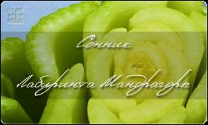 Сельдерей пахучий 'Яблочный' — описание сорта, характеристики