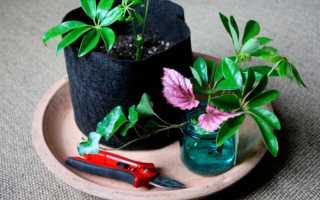 Основные способы размножения растений в домашних условиях