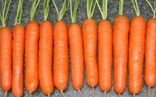Морковь посевная 'Магно F1' — описание сорта, характеристики