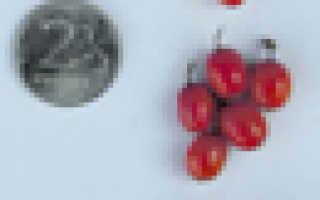 Облепиха 'Янтарная' — описание сорта, характеристики
