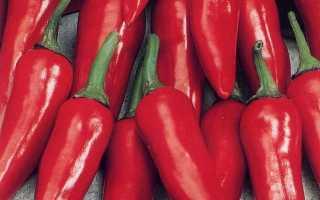 Перец горький 'Пламень' — описание сорта, характеристики