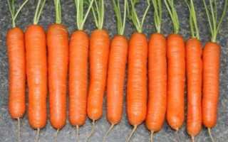 Морковь посевная 'Нантская 4' — описание сорта, характеристики