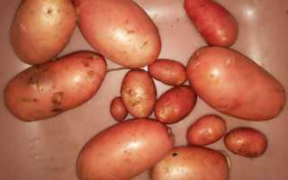 Картофель 'Уральский ранний' — описание сорта, характеристики