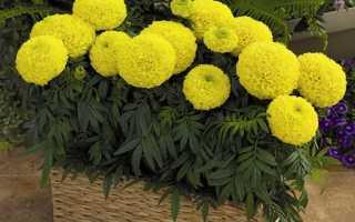 Выбор и посадка цветущих растений для балкона и лоджии