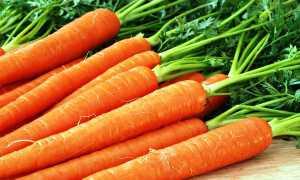 Морковь посевная 'Забава F1' — описание сорта, характеристики