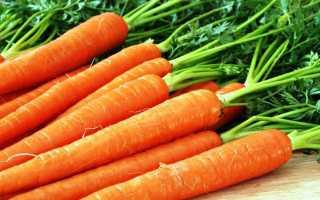 Морковь посевная 'Долянка' — описание сорта, характеристики