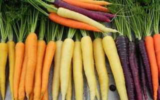 Морковь посевная 'Несравненная' — описание сорта, характеристики