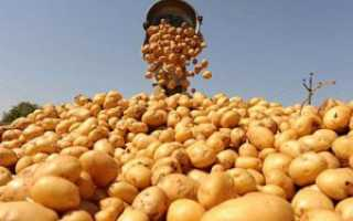 Вторая посадка картофеля и другие виды выращивания этой культуры