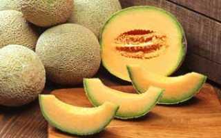 Дыня (Cucumis melo) — описание, выращивание, фото
