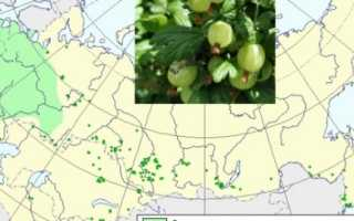 Крыжовник обыкновенный (Ribes uva-crispa) — описание, выращивание, фото
