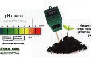 Статьи об удобрениях для сада: как правильно удобрять садовые растения
