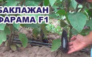 Баклажан 'Экави F1' — описание сорта, характеристики
