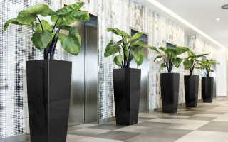 Какие растения выбрать для офиса: обзор лучших находок
