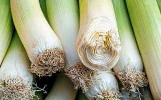 Как хранить лук-порей зимой в домашних условиях